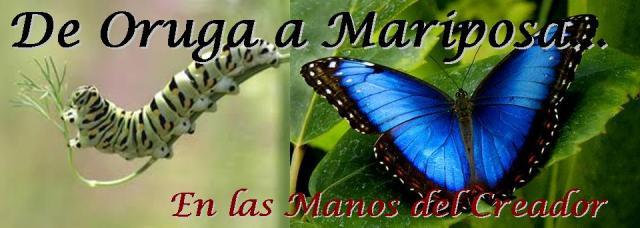 de oruga a mariposa 2