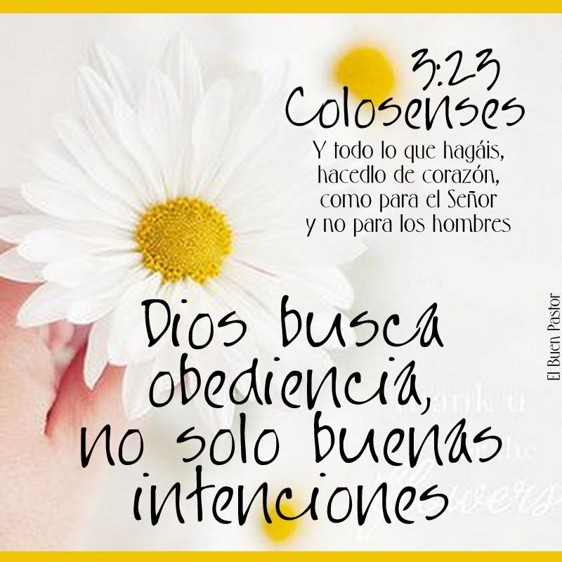 COLOSENSES 3.23  - 2