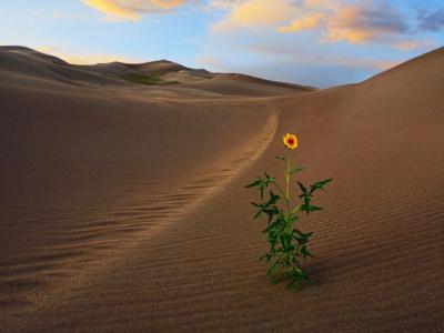 El desierto florecerá